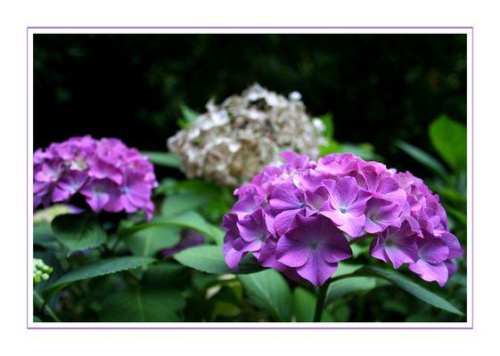 in lila