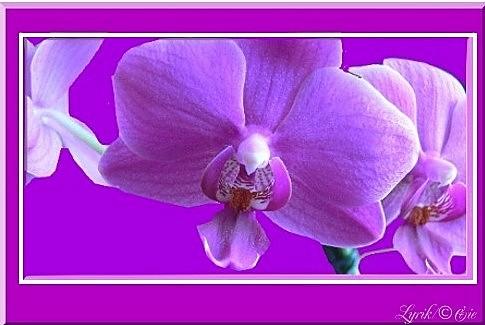 In lila gerahmt