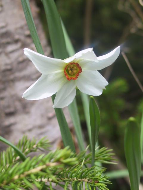 In meinem Garten.