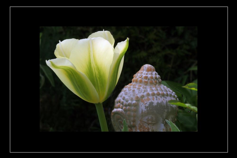 In meinem Garten