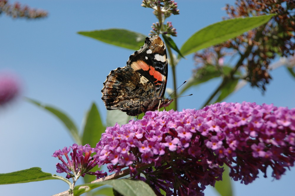 In meinem Garten im Sommer