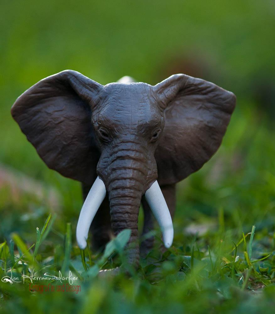 in meinem Garten Lebt ein Elefant.