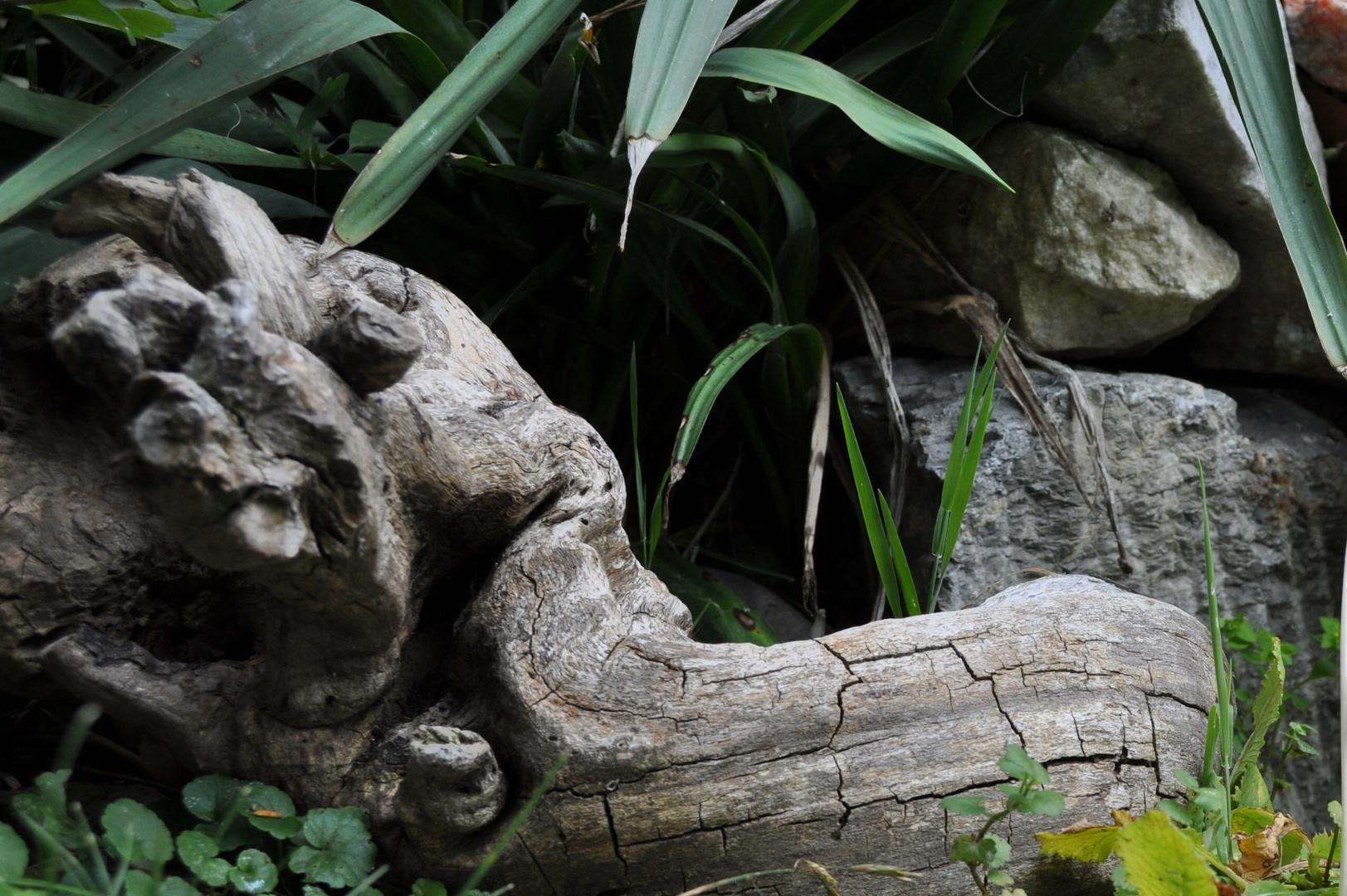 ...in meinem Garten liegt sehr viel altes Holz herum ...
