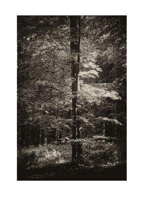 in meinem Wald