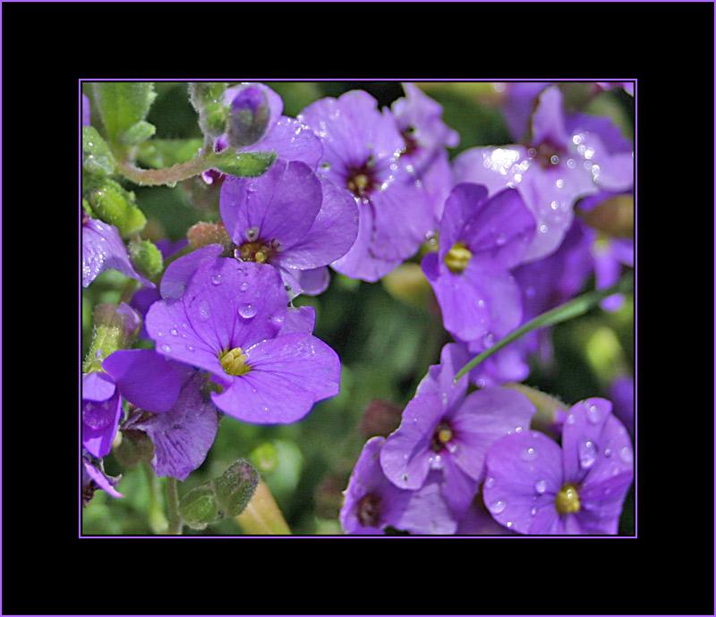 In meines Onkels Garten II