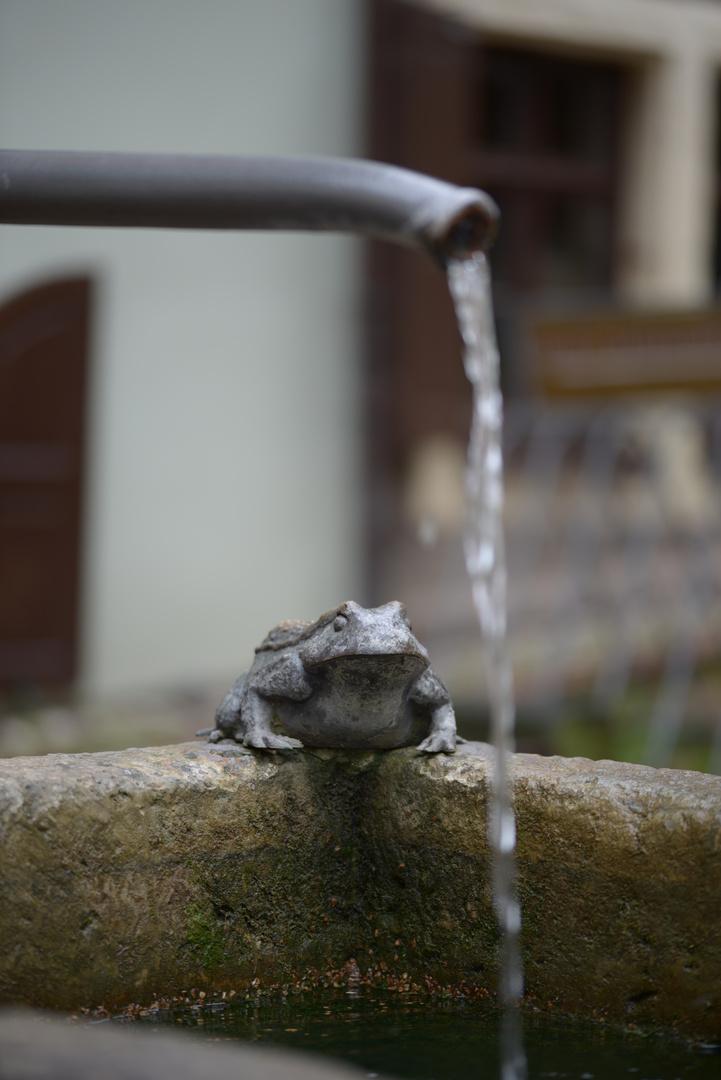 ... in Meißen gefunden, den Frosch!