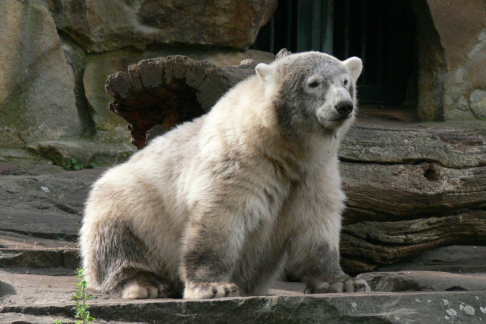 in memoriam: Knut VI