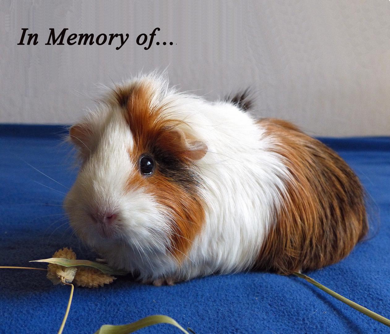 In Memory of meine kleine Miss Little Bit