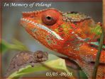 ...In Memory of Pelangi Naga...