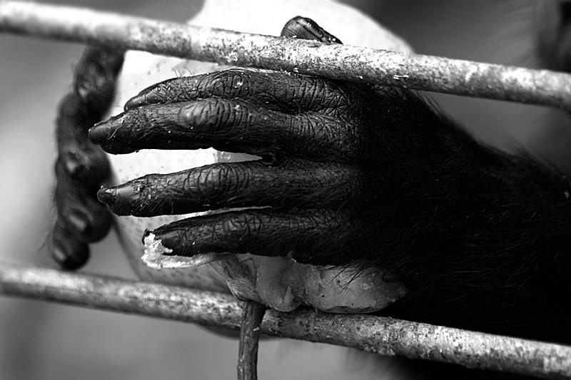 in Menschenhand
