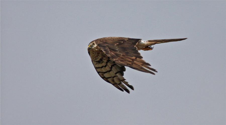 in mock turtle flight