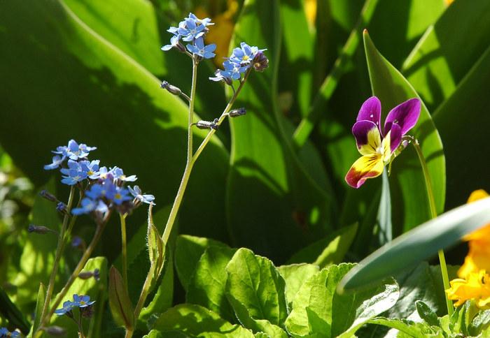In Mutters Garten