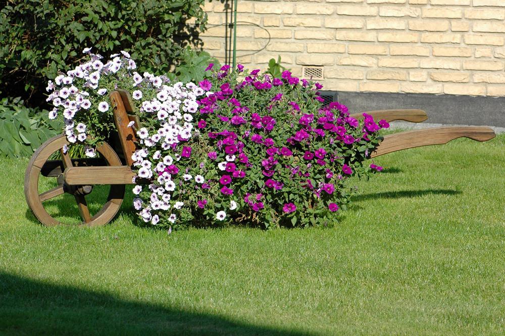 in Nachbars Garten
