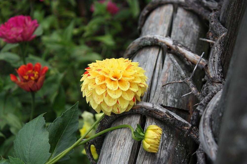 in Omas Garten