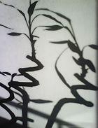...in ombra