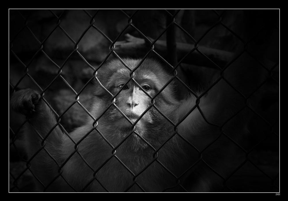 in Prison...