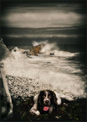 In ricordo di Carla Ippoliti - Bibo naufrago, 2010