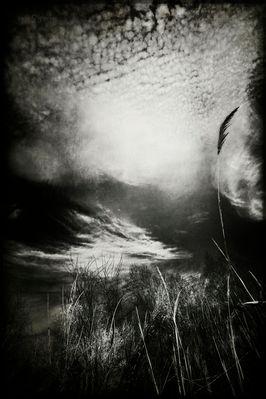 In ricordo di Carla Ippoliti -Cime tempestose, 2011