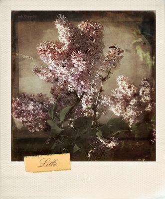 In ricordo di Carla Ippoliti - She is not there, 2010