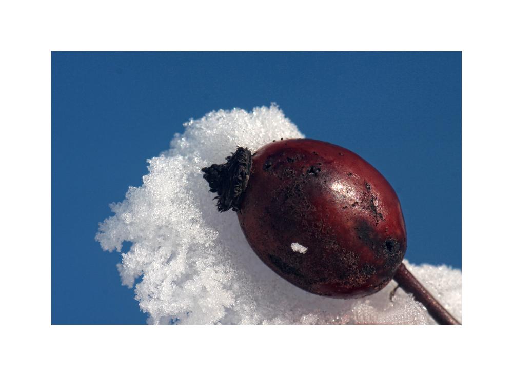 in Schnee gebettet