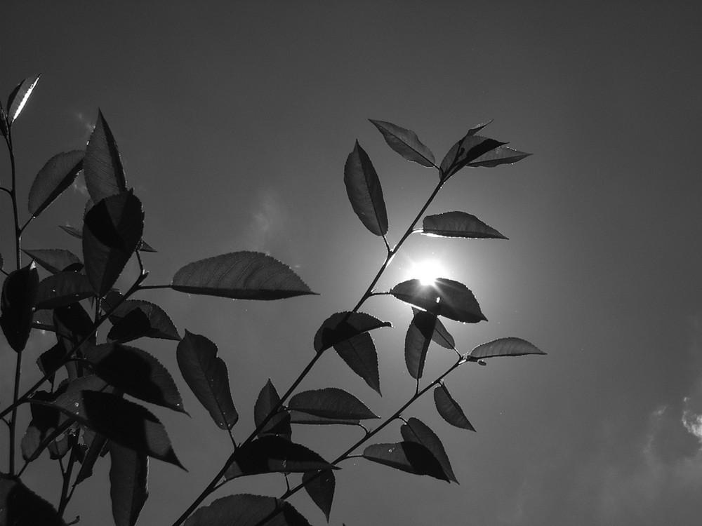 In Schwarz Weiß