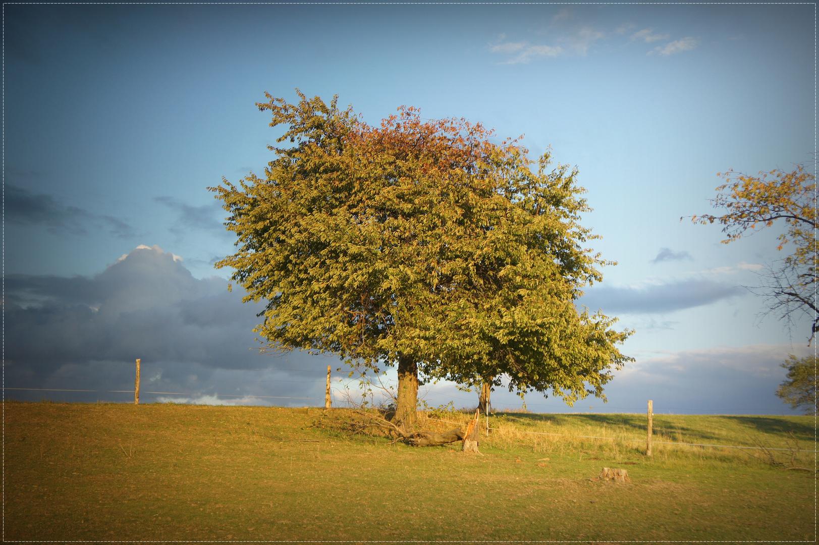 In Sonnenuntergangsstrahlen getauchter Baum