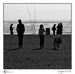 ...in spiaggia con Fido