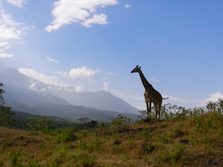 in Tansania,