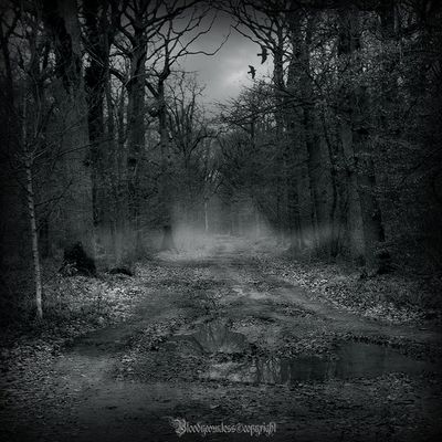 In the dark forest - new serie