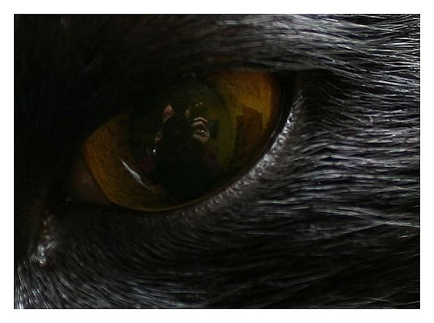 In the eye of a cat