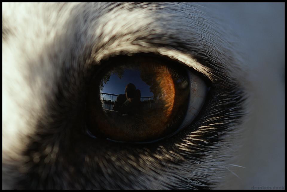 in the eye of sayadina