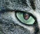 in the eye of the tiger.