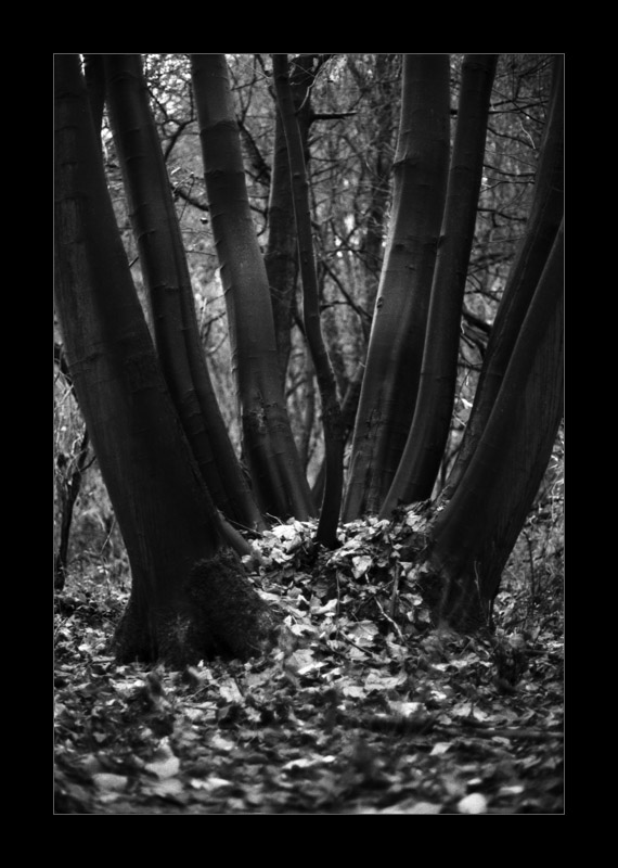In The Heart Of The Wood...