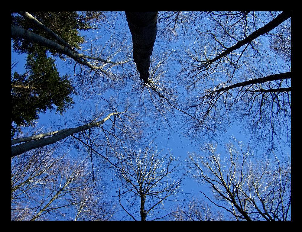 In The Woods - pt. III