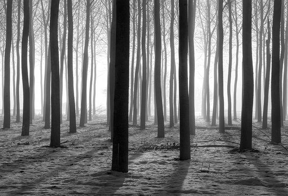 In una boschina in inverno