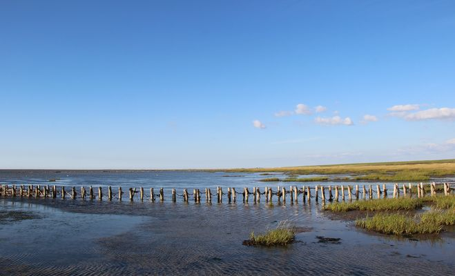 in Vester Vedsted/DK an der Nordsee...