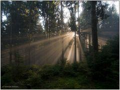 In Wittgensteins Wäldern