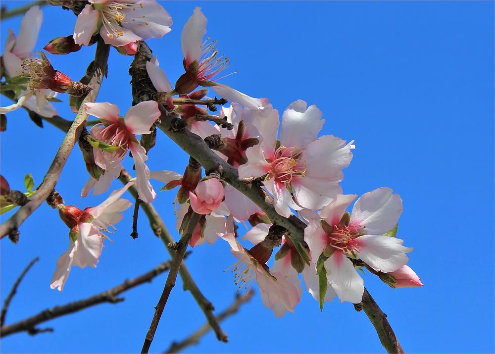 Inbegriff des Frühlings
