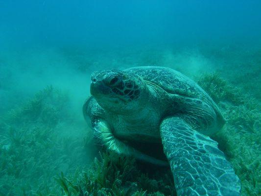 Incontri subacquei (12)