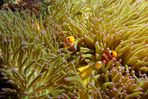 Incontri subacquei (14)