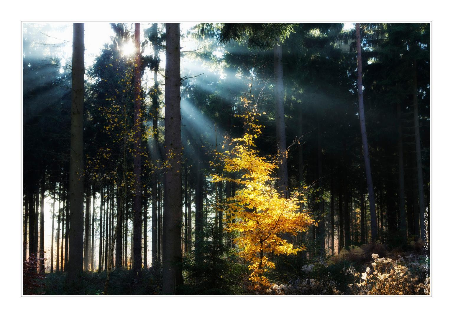 Indian Summer 06 - Lichterspiele in den Wäldern