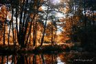 Indian Summer im Spreewald