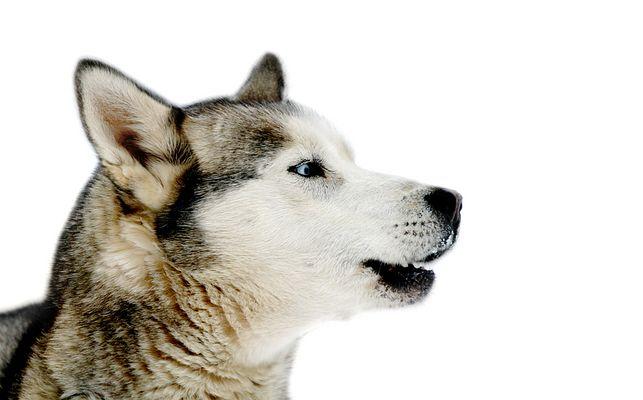 """""""... indianerhund ..."""""""