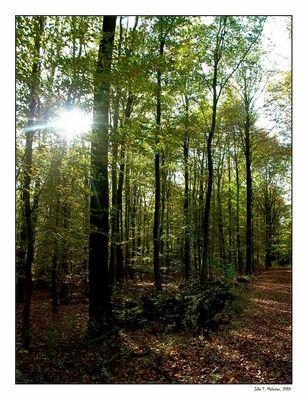 IndianSummer 2 - Birten forest, lower rhine area