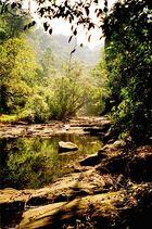 Indien´s Dschungel