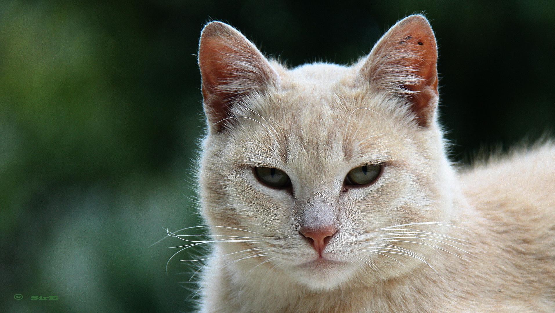 Indipendent Cat.