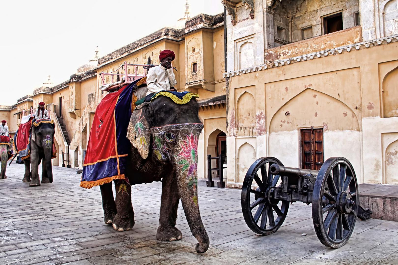 Indische Elephanten