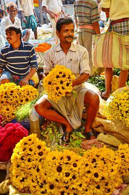 indische Sonnenblumen
