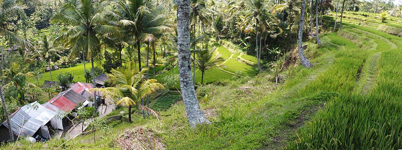 Indonesien - 2 - Bali - 2006