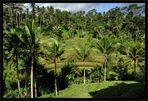 Indonesien – Reisterrassen 1